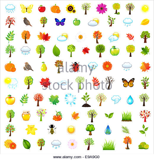Mountain Daisy Cut Out Stock Images & Pictures.