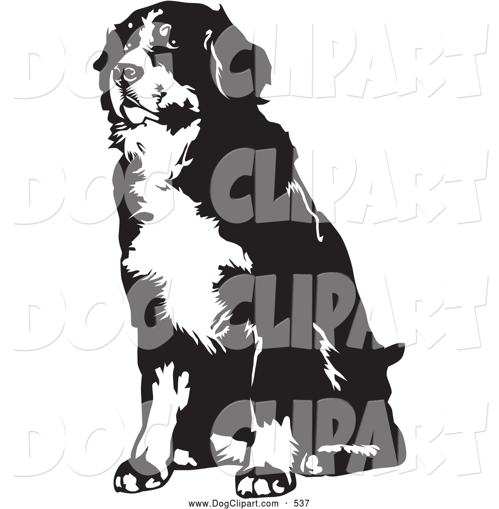 Clip Art of a Cute Seated Bernese Mountain Dog Facing Slightly to.
