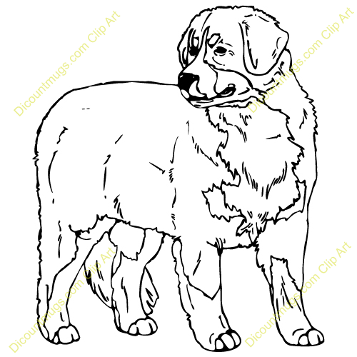 Gallery For > Bernese Mountain Dog Clipart.