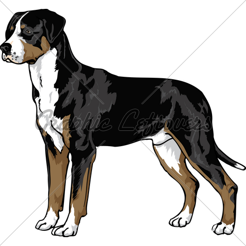 Greater swiss mountain dog clipart.