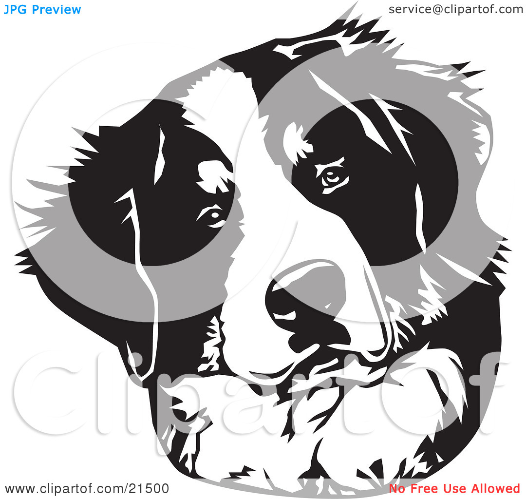 Clipart Illustration of a Curious Bernese Mountain Dog Tilting His.