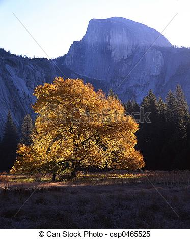 Stock Images of HalfDome&EnglishElm.