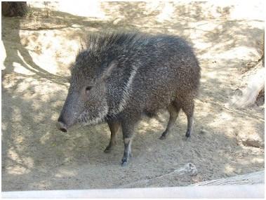 Image result for clipart flora y fauna de Aconcagua.