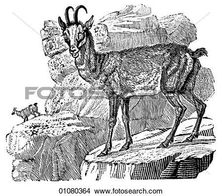 Drawings of Flora & Fauna.