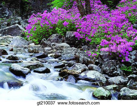 Picture of Korea, scene, scenery, landscape, valley, mountain.