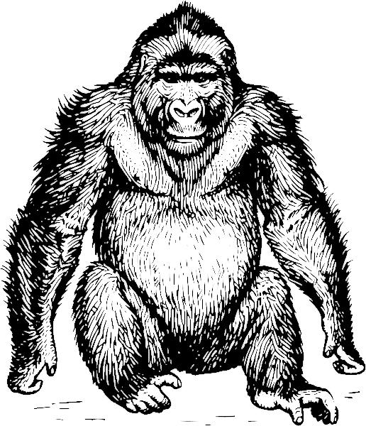 Ape clipart mountain gorilla, Ape mountain gorilla.