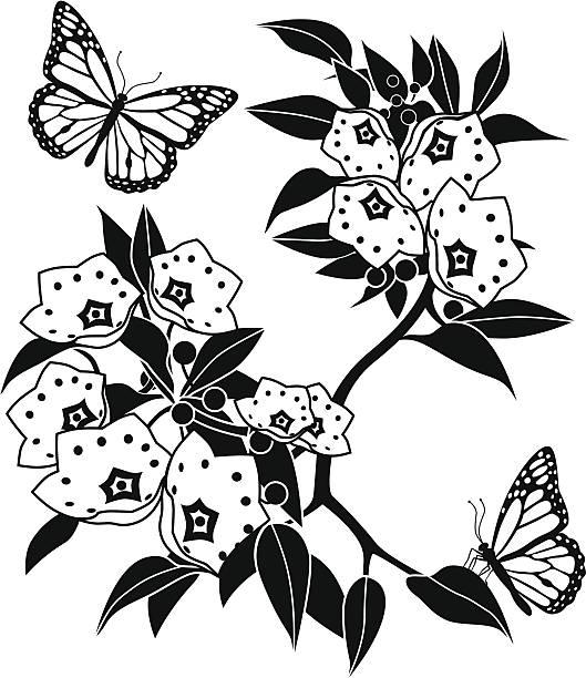 Mountain Laurel Illustrations, Royalty.