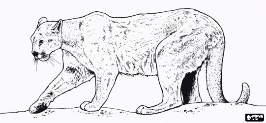 Mountain Lion Black And White Clipart.