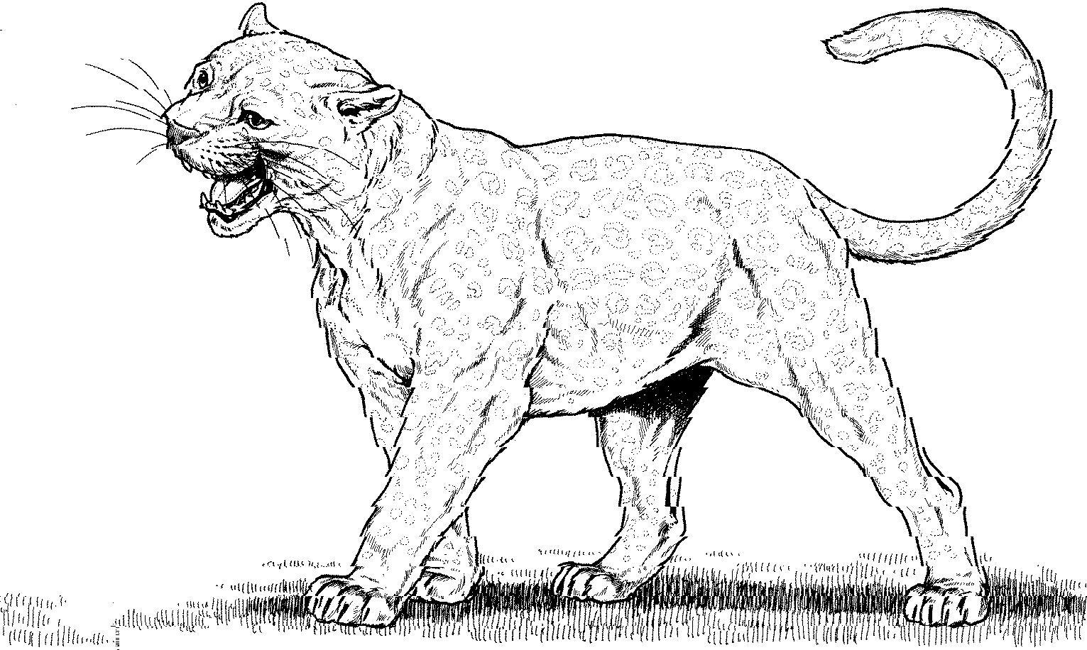 Free Mountain Lion Clipart Black And White, Download Free.