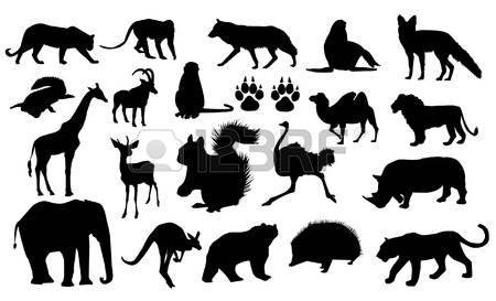 865 Mountain Lion Stock Vector Illustration And Royalty Free.
