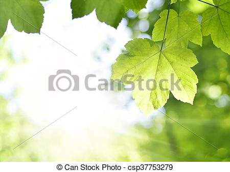 Picture of Fresh green leaves.