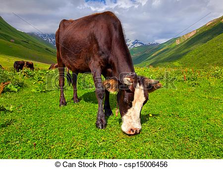 Stock Images of Cattle on a mountain pasture. Summer sunny day.