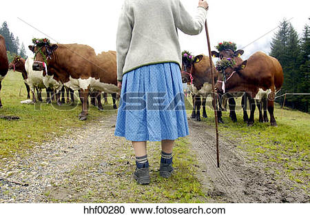 Stock Photography of Woman bringing the cattle down from the.