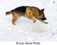 Stock Image of Mountain Rescue Service dog at Bulgarian Red Cross.