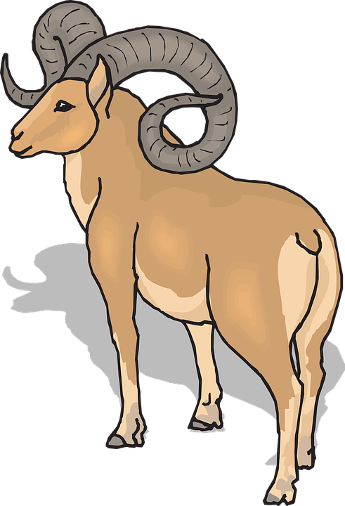 Bighorn, Sheep.