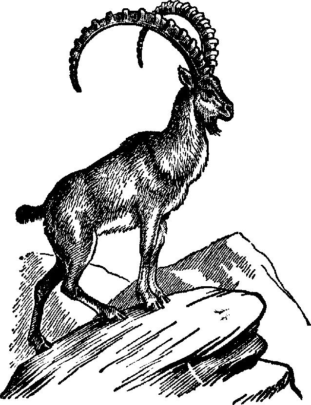 Mountain sheep clipart.
