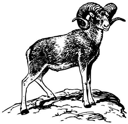 1,912 Mountain Sheep Stock Illustrations, Cliparts And Royalty.
