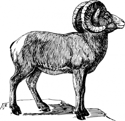 Sheep Vector.