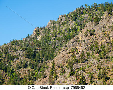 Stock Image of Evergreen Trees on a Steep, Rocky Mountainside in.