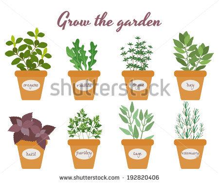 Herbs Growing Stock Photos, Royalty.