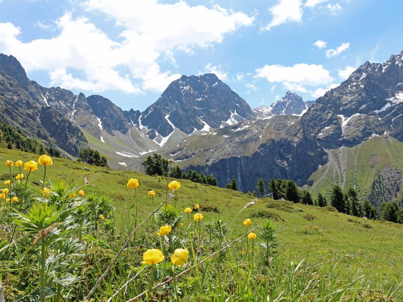 Apart Alpenglühn.