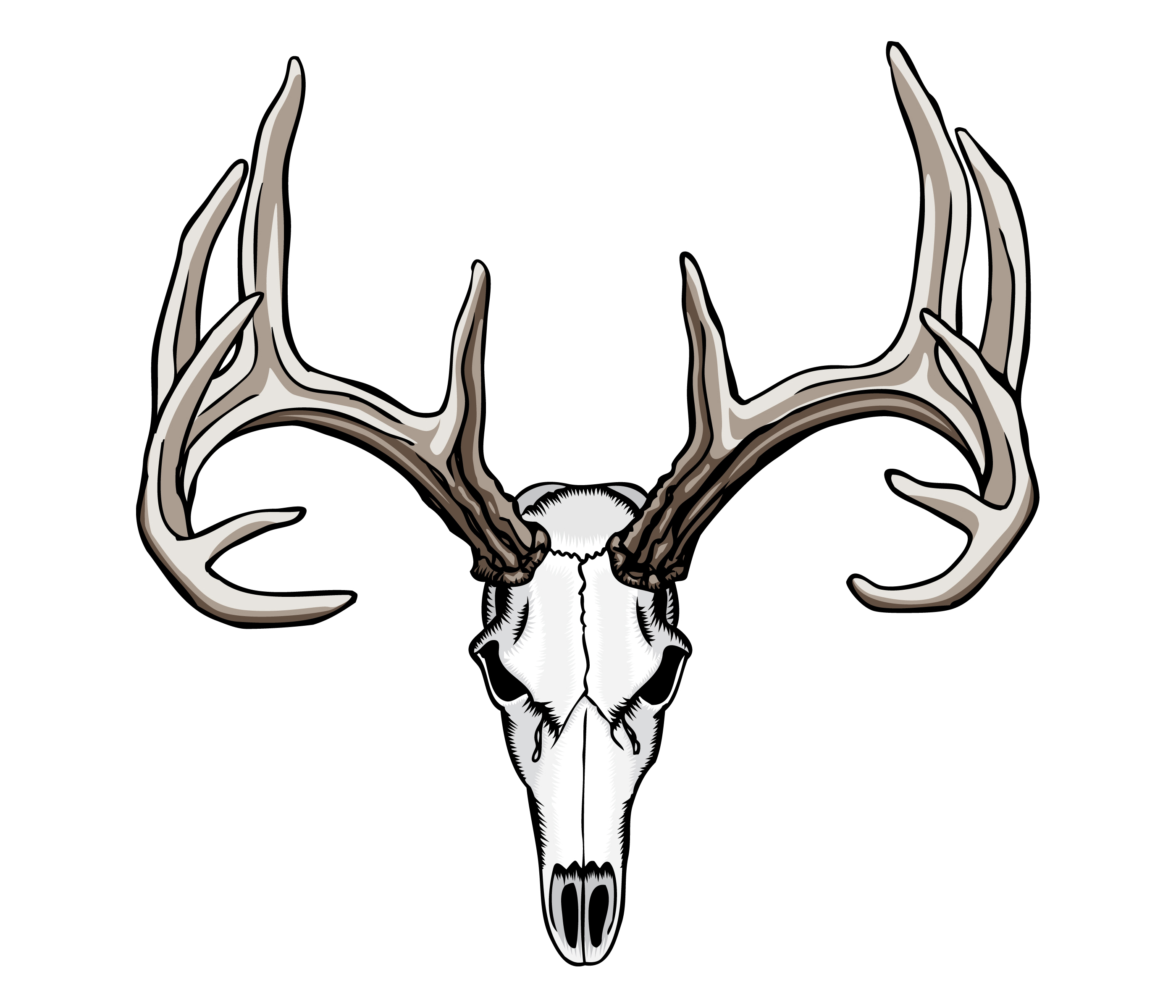 Animated White Tail Shull Mounts.