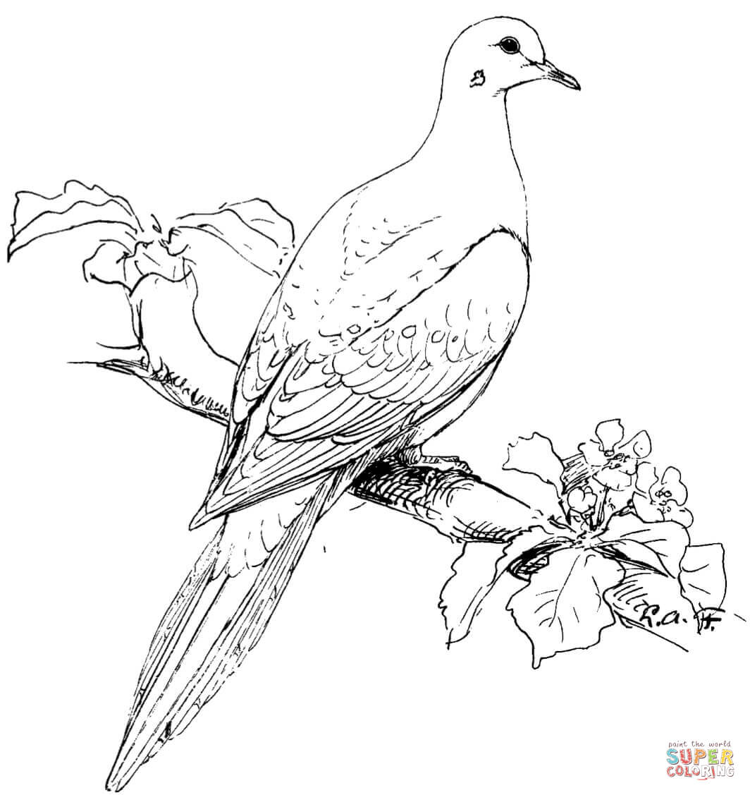 Perched Mourning Dove coloring page.