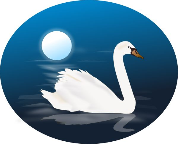 1000+ images about ♦Swans♦ on Pinterest.