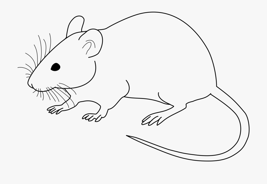Laboratory Mouse Clip Art Library File Vector.