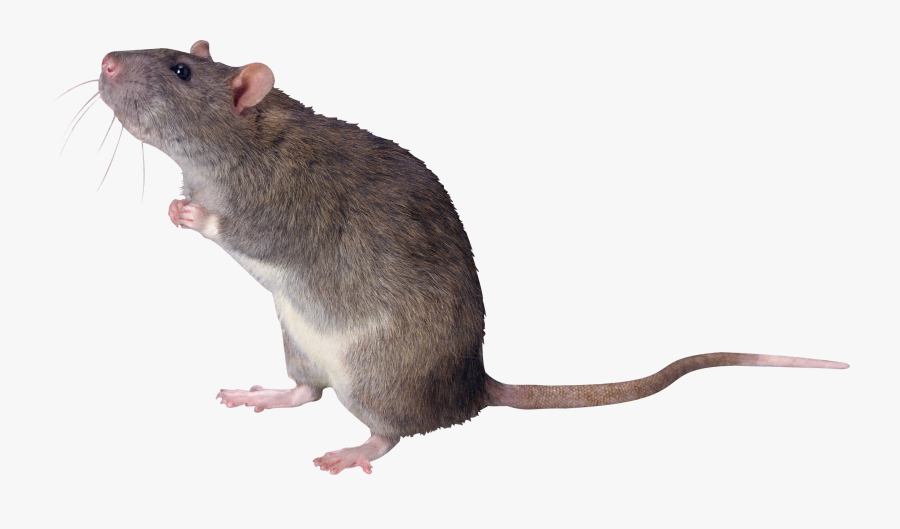 Clip Art Mouse Mice Png Free.