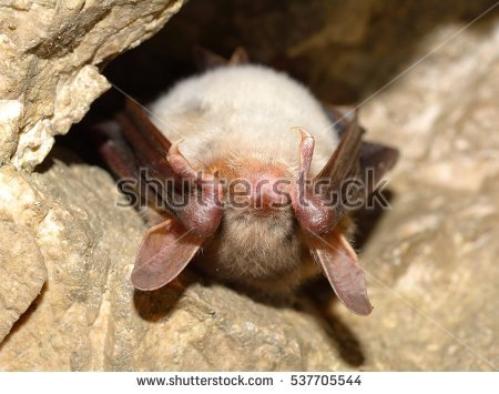 Mouse Flying Stock Photos, Royalty.