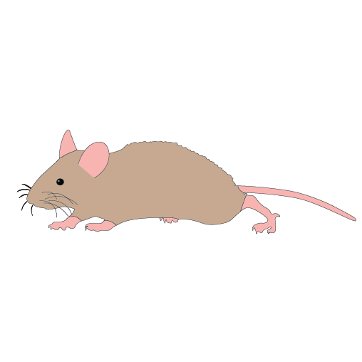 Mouse Running Clipart.