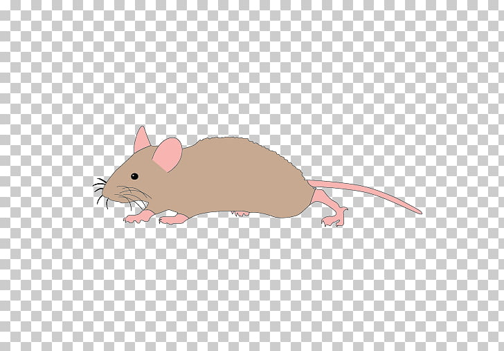 Mickey Mouse Rat Computer mouse , Mouse Running s PNG.