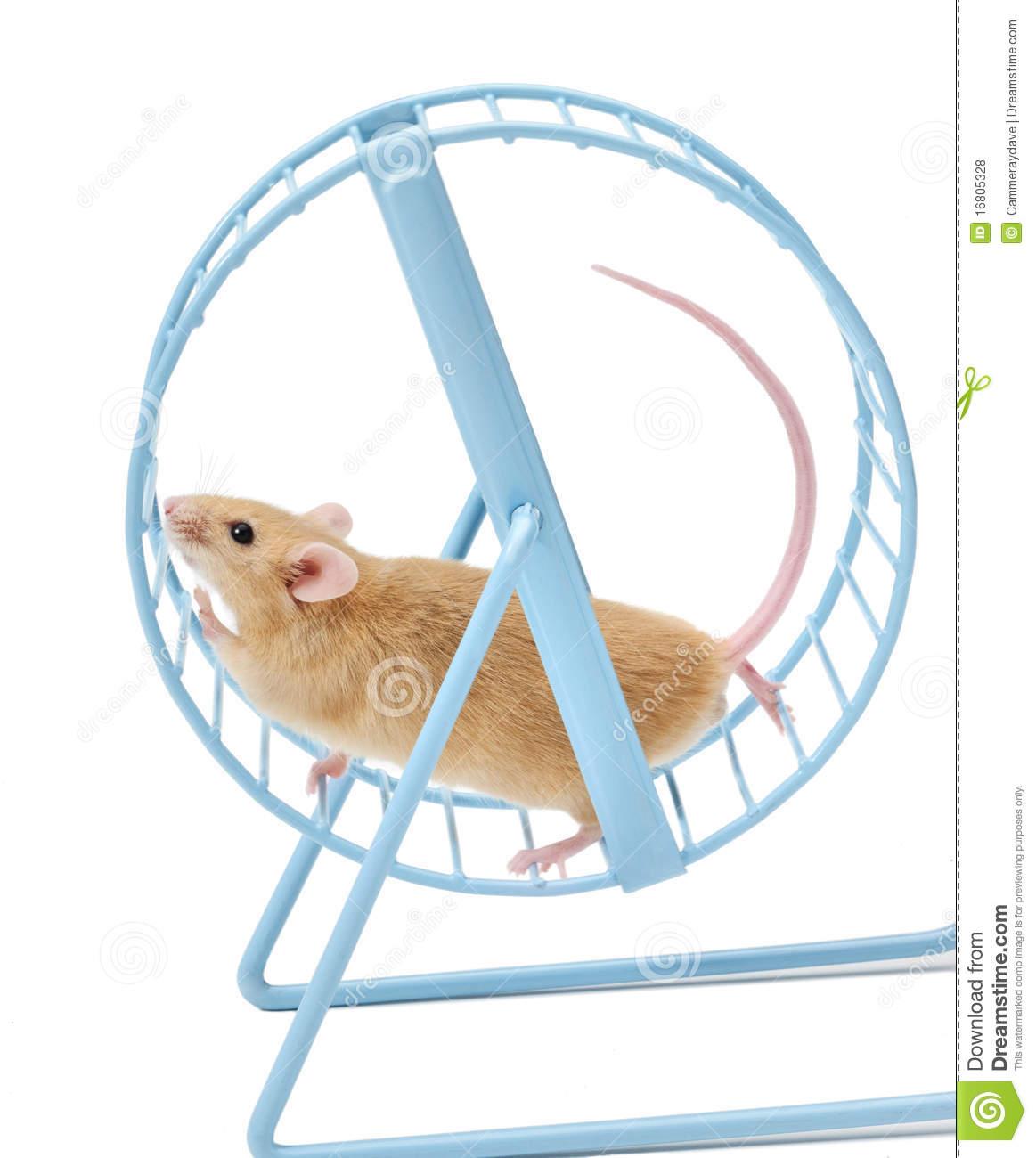 Mouse Running Wheel.