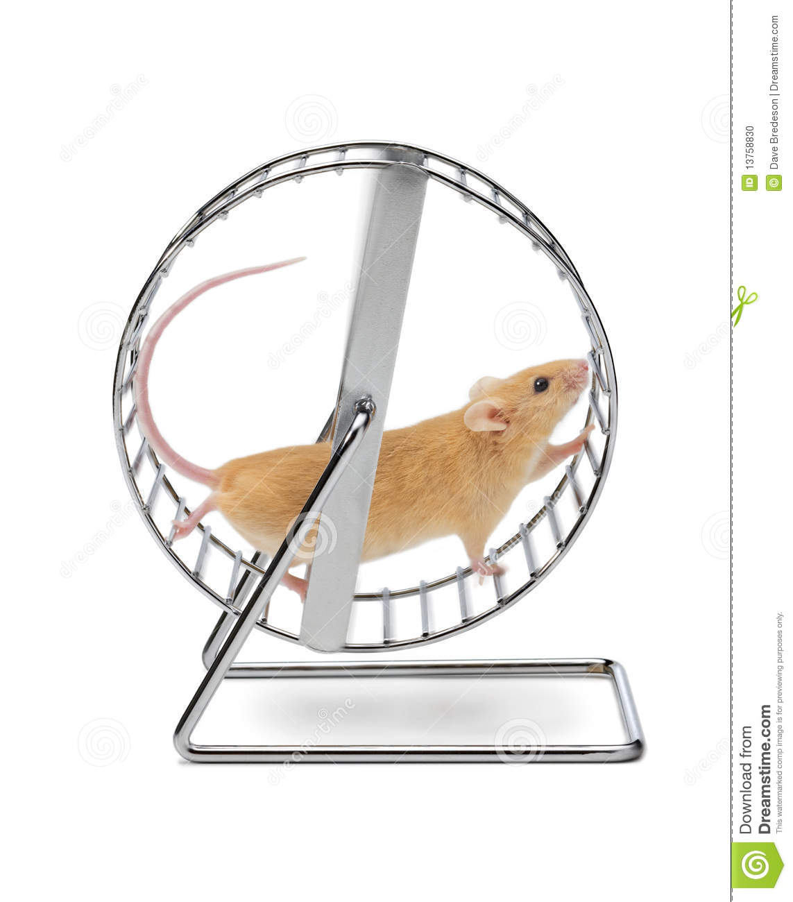 Mouse Hamster Exercise Wheel Stock Photo.