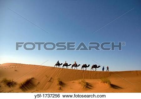 Stock Images of A camel caravan moving at the sand dunes of the.