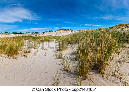 Stock Images of Moving dunes park near Baltic Sea in Leba, Poland.