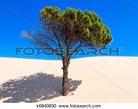 Stock Photography of Moving Sand dune covers a tree in Punta.