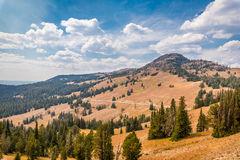 Mt. Washburn, Yellowstone Park Royalty Free Stock Photos.