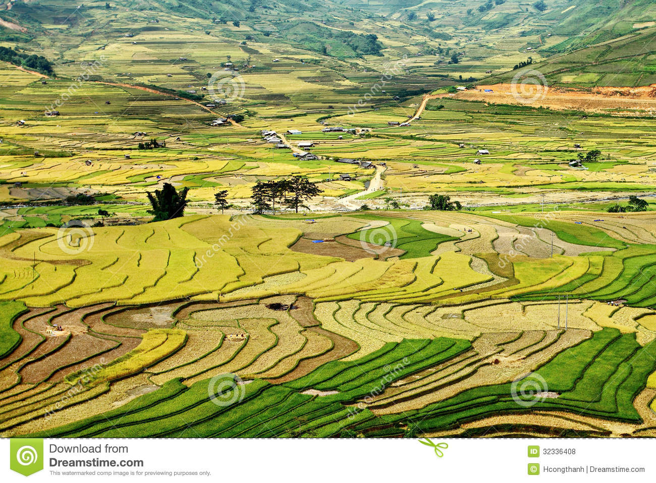 Terraced Rice Fields At Tu Le Valley, Mu Cang Chai Stock Image.