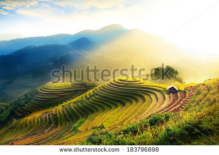 Rice Fields On Terraced Mu Cang Stock Photo 176408066.