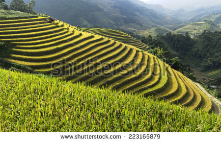 Mu cang chai district clipart #15