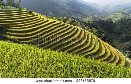 Mu cang chai district clipart #15