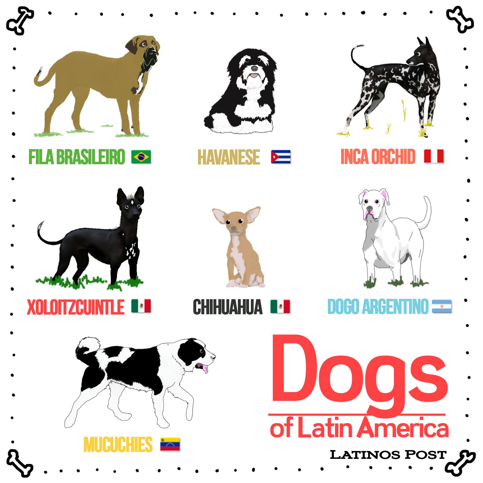 Dog Breeds of Latin America.