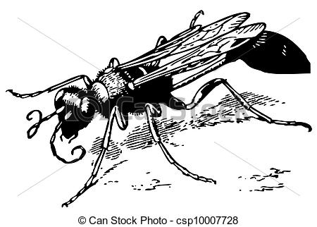 Vector Illustration of Yellow mud dauber on the ground csp10007728.