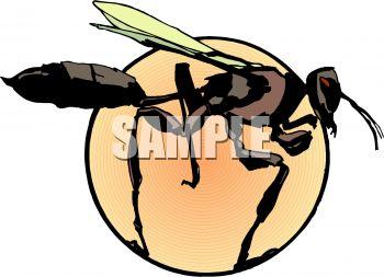 Mud Dauber Wasp Clip Art.