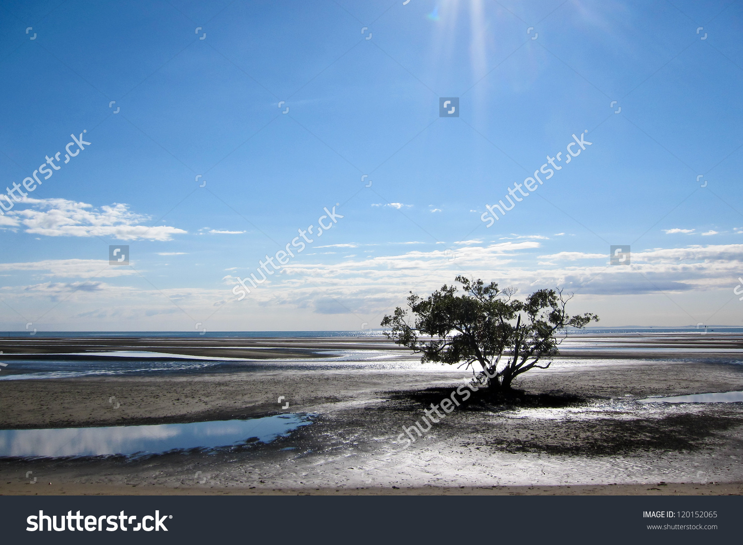 Single Tree Growing Out Of Mud Flats Under A Clear Blue Sky.