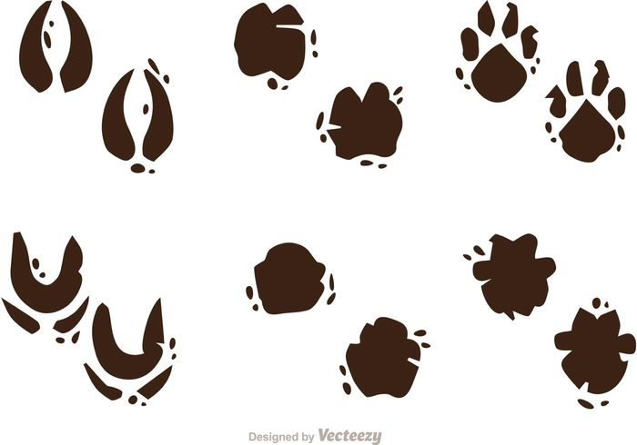 Muddy Animal Footprint Vectors.