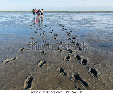Mud Flat Stock Photos, Royalty.