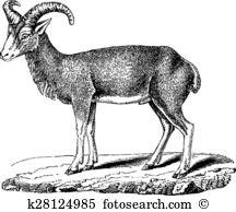 Mouflon Clip Art EPS Images. 38 mouflon clipart vector.